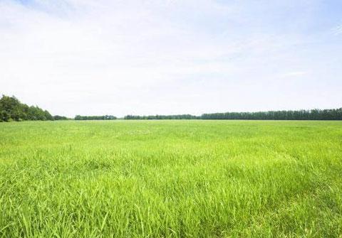 Земельный участок в собственность