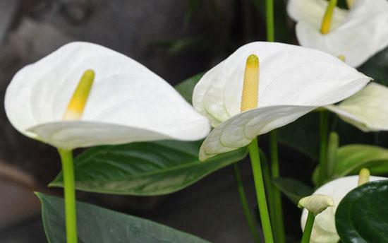 В период роста цветка его нужно подкармливать каждые 2 недели