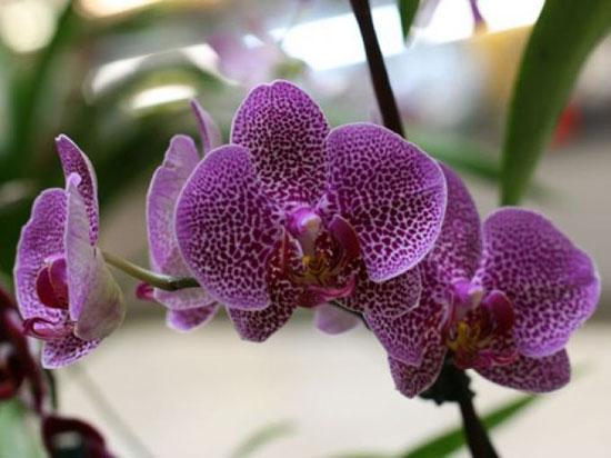 как ухаживать за орхидеей после покупки
