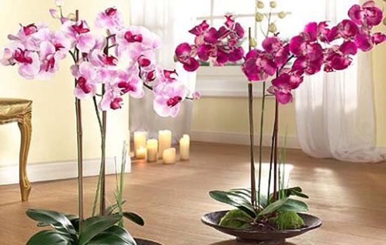 Правила полива и ухода за орхидеями
