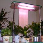 Какие люминесцентные лампы подходят для подсветки растений