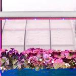 Светодиодные фитолампы для выращивания растений и рассады