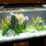 Преимущества светодиодных ламп для освещения аквариума