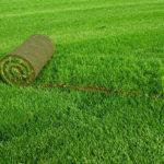 Рулонный газон своими руками на даче: подготовка и технология укладки