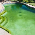 Как бороться с водорослями в бассейне